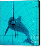 Dolphin Experiment Canvas Print