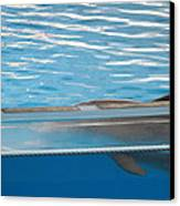 Dolphin Show - National Aquarium In Baltimore Md - 121211 Canvas Print by DC Photographer