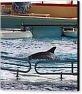 Dolphin Show - National Aquarium In Baltimore Md - 1212115 Canvas Print by DC Photographer