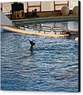 Dolphin Show - National Aquarium In Baltimore Md - 1212142 Canvas Print by DC Photographer