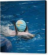 Dolphin Show - National Aquarium In Baltimore Md - 1212155 Canvas Print by DC Photographer