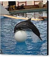 Dolphin Show - National Aquarium In Baltimore Md - 1212160 Canvas Print