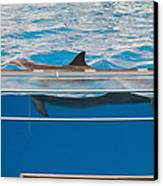 Dolphin Show - National Aquarium In Baltimore Md - 1212173 Canvas Print