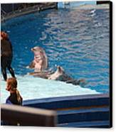 Dolphin Show - National Aquarium In Baltimore Md - 1212174 Canvas Print by DC Photographer