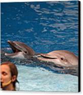 Dolphin Show - National Aquarium In Baltimore Md - 1212177 Canvas Print