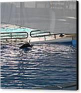 Dolphin Show - National Aquarium In Baltimore Md - 121218 Canvas Print