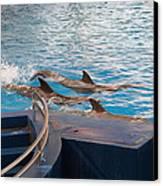 Dolphin Show - National Aquarium In Baltimore Md - 1212186 Canvas Print