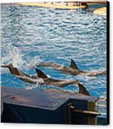 Dolphin Show - National Aquarium In Baltimore Md - 1212187 Canvas Print by DC Photographer