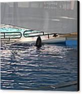 Dolphin Show - National Aquarium In Baltimore Md - 121219 Canvas Print