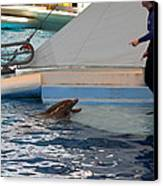 Dolphin Show - National Aquarium In Baltimore Md - 1212195 Canvas Print