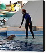 Dolphin Show - National Aquarium In Baltimore Md - 1212196 Canvas Print by DC Photographer
