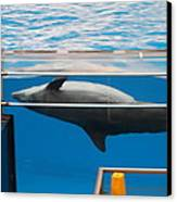 Dolphin Show - National Aquarium In Baltimore Md - 1212198 Canvas Print