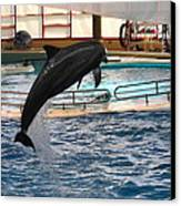 Dolphin Show - National Aquarium In Baltimore Md - 1212212 Canvas Print by DC Photographer