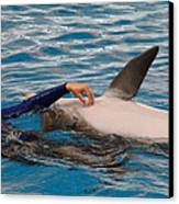 Dolphin Show - National Aquarium In Baltimore Md - 1212231 Canvas Print by DC Photographer
