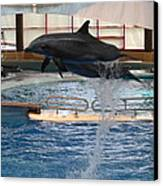Dolphin Show - National Aquarium In Baltimore Md - 1212249 Canvas Print