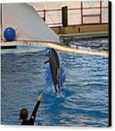 Dolphin Show - National Aquarium In Baltimore Md - 121239 Canvas Print by DC Photographer
