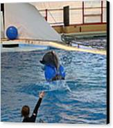 Dolphin Show - National Aquarium In Baltimore Md - 121240 Canvas Print by DC Photographer