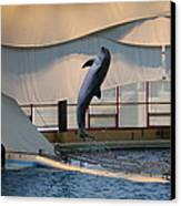 Dolphin Show - National Aquarium In Baltimore Md - 121255 Canvas Print