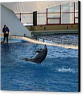 Dolphin Show - National Aquarium In Baltimore Md - 121258 Canvas Print by DC Photographer