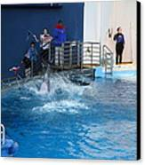 Dolphin Show - National Aquarium In Baltimore Md - 121292 Canvas Print by DC Photographer