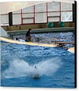 Dolphin Show - National Aquarium In Baltimore Md - 121297 Canvas Print by DC Photographer