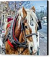 Donald 2 Canvas Print by Baywest Imaging