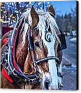 Donald Canvas Print by Baywest Imaging