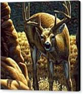 Whitetail Buck - Double Take Canvas Print by Crista Forest