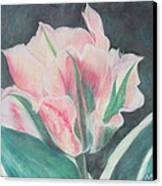 Double Tulip Canvas Print by Cathy Lindsey