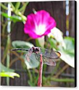 Dragonfly On Watch Canvas Print by Walter Klockers