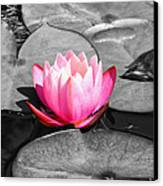 Dream Lily Canvas Print by Mariola Bitner