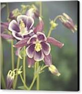 Dreamy Columbine Flowers Canvas Print by Cathie Tyler