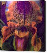 Dreamy Orchid Canvas Print by Jill Balsam