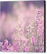 Dreamy Pink Heather Canvas Print