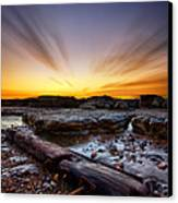 Driftwood Canvas Print by Mark Leader