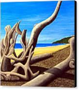 Driftwood - Nature's Artwork Canvas Print