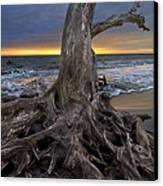 Driftwood On Jekyll Island Canvas Print by Debra and Dave Vanderlaan
