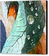 Drops On A Leaf Canvas Print by Daniel Janda