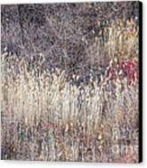 Dry Grasses And Bare Trees In Winter Forest Canvas Print by Elena Elisseeva