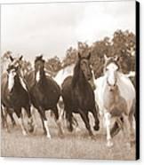 Duchess Sanctuary Big Herd Canvas Print