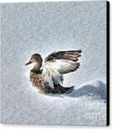 Duck Angel Canvas Print
