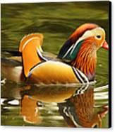 Duck Wild - Mandarin Canvas Print by DerekTXFactor Creative