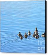 Ducklings Day Out Canvas Print by Kaye Menner