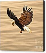Eagles Pause Canvas Print
