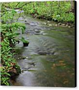 Early Summer At Borden Brook Canvas Print by Andrew Pacheco