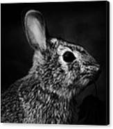 Eastern Cottontail Rabbit Portrait Canvas Print by Rebecca Sherman