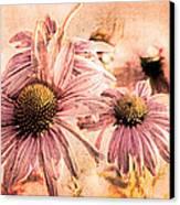 Echinacea Impressions  Canvas Print