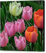Eight Tulips And One Bee Canvas Print by Muriel Levison Goodwin