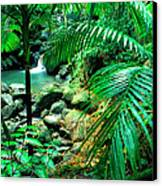 El Yunque Palm Trees And Waterfall Canvas Print by Thomas R Fletcher