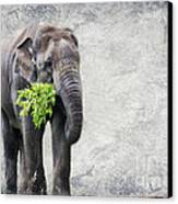 Elephant With A Snack Canvas Print
